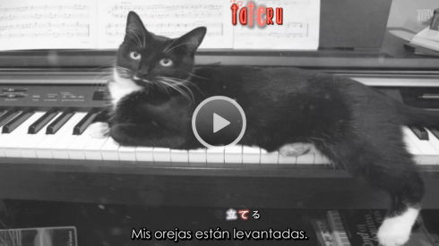 pianisto t.png